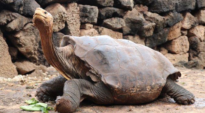 Esta tortuga tuvo tanto sexo que salvó a toda su especie.