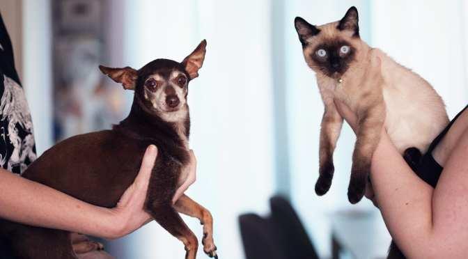 China saca a perros y gatos de su lista de animales comestibles.